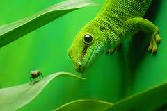 grön ödla för gecko Arkivfoto