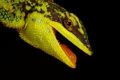 grön ödlatree Arkivfoto