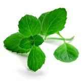 grön örtmint royaltyfria foton