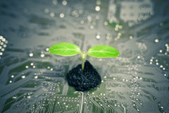 Grön IT Royaltyfri Foto