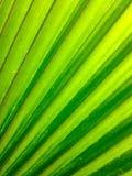 Grön abstrakt begrepp Royaltyfri Fotografi