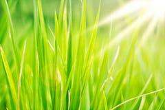 Grön abstrakt naturbakgrund Royaltyfria Bilder