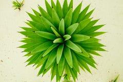 Grön abstrakt naturbakgrund Royaltyfria Foton