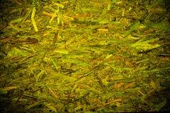 Grön abstrakt organisk texturbakgrund Royaltyfria Foton