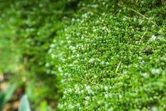 Grön abstrakt suckulent bakgrund eller textur Arkivbilder