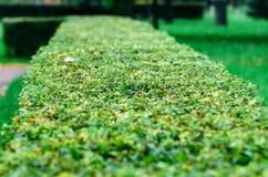 Grön abstrakt väggbakgrund, gräsplan lämnar väggtextur Arkivfoton