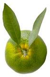 Grön apelsin Royaltyfria Foton