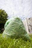 grön avfalls fotografering för bildbyråer