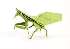 grön bönsyrsaorigami Arkivbild