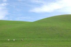 grön back Arkivfoton