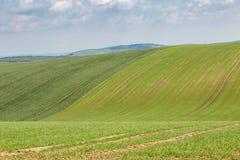 Grön backe i Sussex Arkivfoton