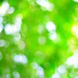 Grön bakgrund Royaltyfri Bild