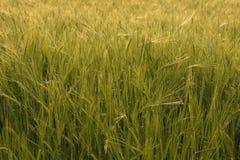 Grön bakgrund Fotografering för Bildbyråer