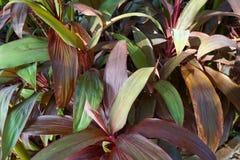 Grön bakgrund av jordräkningsväxterna Arkivbild