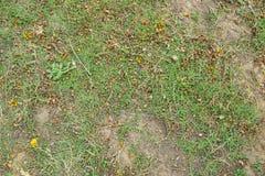 Grön bakgrund av jordräkningsväxterna Royaltyfria Bilder