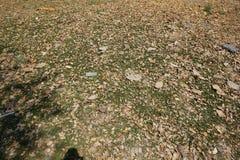 Grön bakgrund av jordräkningsväxterna Royaltyfria Foton