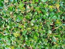 Grön bakgrund av jordräkningsväxterna Royaltyfri Foto