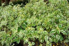 Grön bakgrund av jordräkningsväxterna hösten colors seamless textur för leavesmodell Arkivbilder