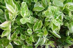 Grön bakgrund av jordräkningsväxterna hösten colors seamless textur för leavesmodell Arkivfoton