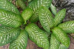 Grön bakgrund av jordräkningsväxterna hösten colors seamless textur för leavesmodell Royaltyfri Foto