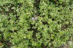 Grön bakgrund av jordräkningsväxterna hösten colors seamless textur för leavesmodell Royaltyfri Fotografi