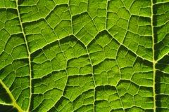 Grön bakgrund för bladfibernärbild Arkivfoton