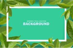 Grön bakgrund för tebladvektornatur Arkivbilder