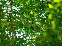 Grön bakgrund från naturen Arkivbild