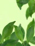 Grön bakgrund med den selektiva fokusen Arkivfoto