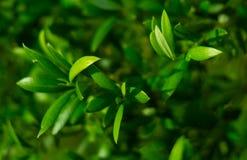 Grön bakgrund med en växt Royaltyfria Foton