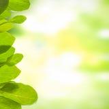 Grön bakgrund med leafs Arkivbild