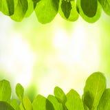 Grön bakgrund med leafs Royaltyfri Bild