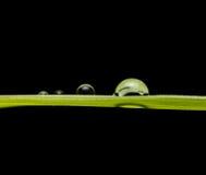 Grön bakgrund med svart Royaltyfri Bild