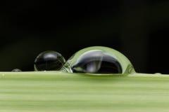 Grön bakgrund med svart Arkivbilder