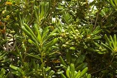 Grön bakgrund med tropiska växter och träd arkivfoto