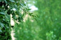 Grön bakgrund Grön suddighetstextur och bakgrund Abstrakt bakgrundstextur av ett grönt blad Fotografering för Bildbyråer