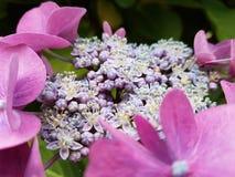 Grön bakgrunds- och rosa färgblomma Royaltyfria Foton