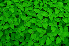 Grön bakgrundstextur Arkivfoto