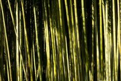 Bambo Royaltyfria Bilder