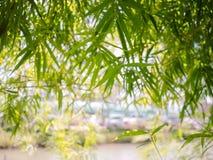 Grön bambu är en bakgrund fotografering för bildbyråer