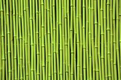 Grön bambu Arkivfoton
