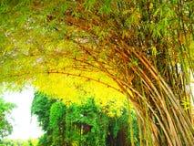 Grön bambu Royaltyfri Foto