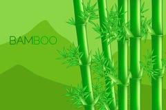Grön bambu Royaltyfria Foton