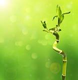 Grön bambu i bakgrundsbokehen Arkivfoto