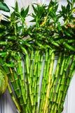 Grön bambu i huset lägenhetdekor Fotografering för Bildbyråer