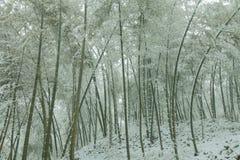 Grön bambu och snö Royaltyfria Foton