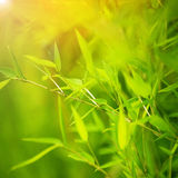 Grön bambubakgrund Royaltyfria Bilder