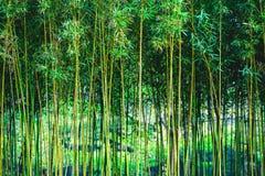 Grön bambuskog Arkivfoton