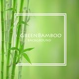 Grön bambuvektorillustration Royaltyfri Fotografi