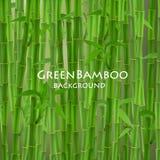 Grön bambuvektorillustration Arkivbilder